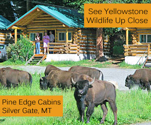 Pine Edge Cabins - Yellowstone Lodging - Whether you nordic or backcountry ski, enjoy wildlife photography in Yellowstone Park, like to fish area waters, or just want a weekend getaway with guys and gals, our cozy cabins, located 1/2 mile from Yellowstone's northeast entrance, is your headquarters for winter fun and relaxation.