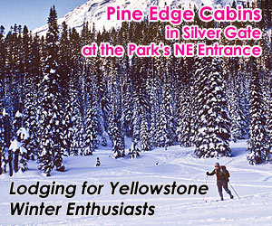 Pine Edge Cabins - Lodging for Winter Enthusiast - Whether you nordic or backcountry ski, enjoy wildlife photography in Yellowstone Park, or just want a weekend getaway with guys and gals, our cozy cabins, located 1/2 mile from Yellowstone's northeast entrance, is your headquarters for winter fun and relaxation.