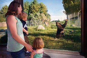 ZooMontana: Fun for every age! :: Come and enjoy a leisurely stroll amongst nature. 70 lush acres mingled with over 100 animals of 56 species including Grizzly Bear, Otters and Siberian Tigers and Red Pandas.
