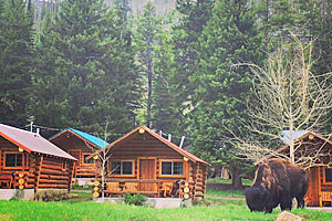 Lodging, Store, Outdoor Rentals near Cooke City
