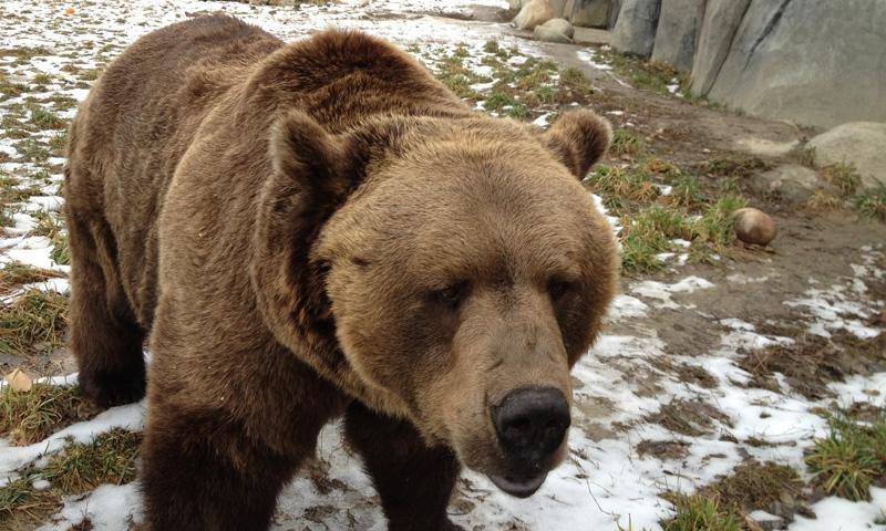 Zoo Montana In Billings Alltrips
