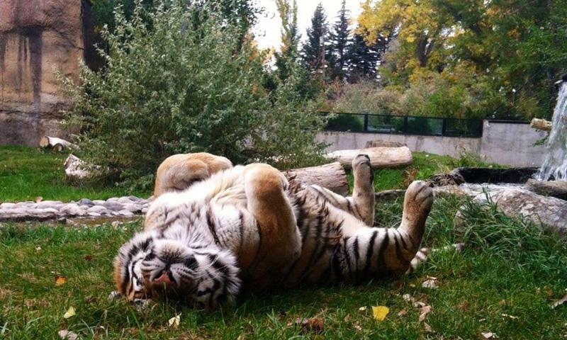 Billings Zoo