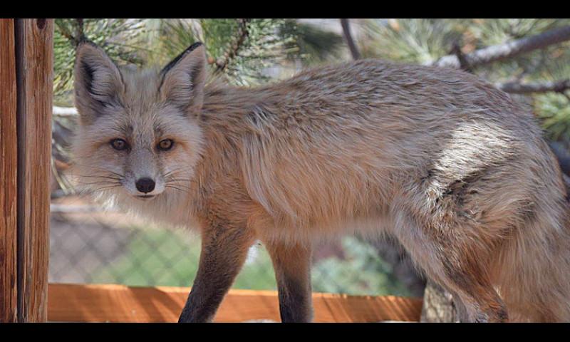Yellowstone Wildlife Sanctuary Beartooth Nature Center