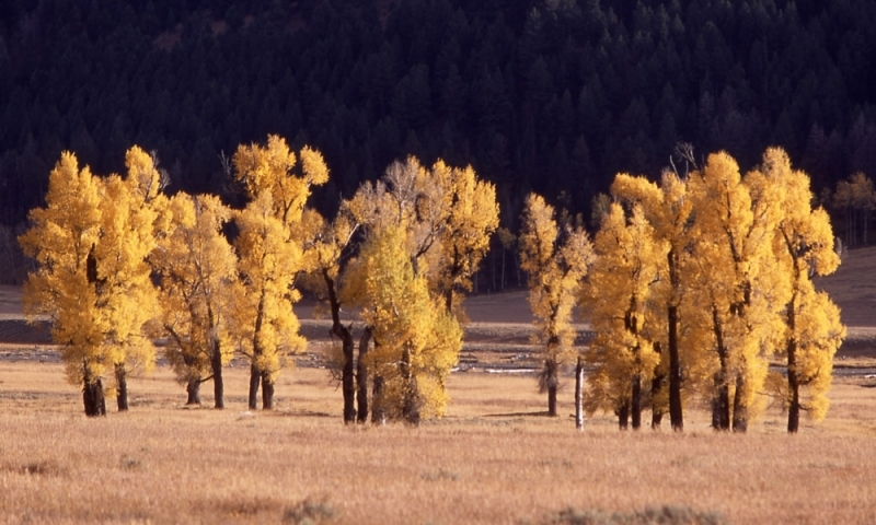 Lamar Valley Tower Roosevelt Yellowstone