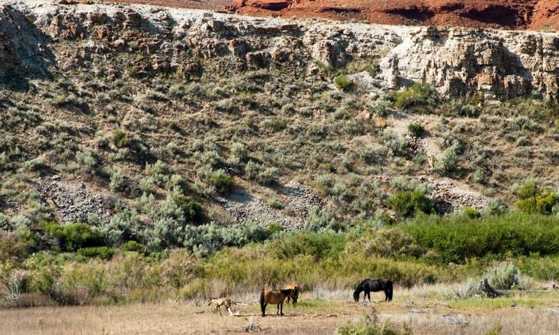 Pryor Mountain Horse Sanctuary