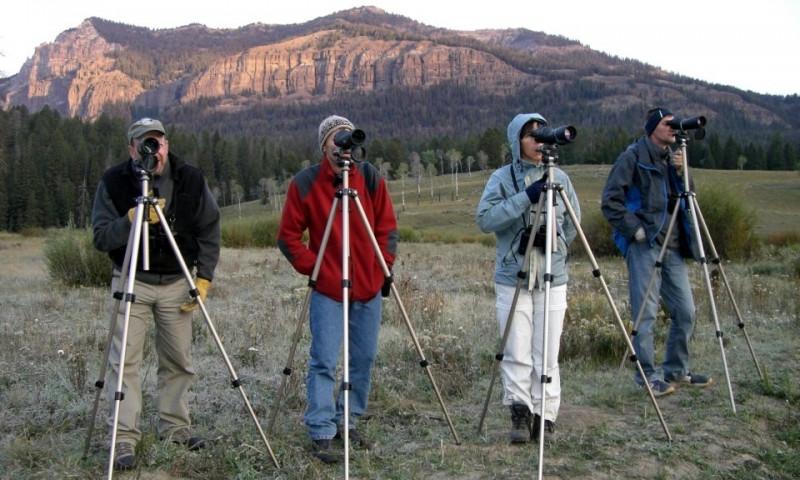 Wildlife Tours in Yellowstone