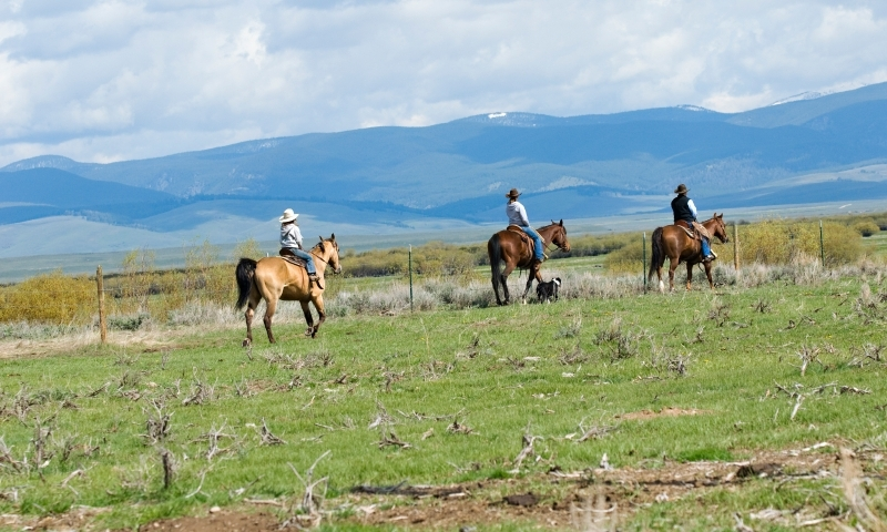 Horseback Riding Bitteroot Mountains Montana